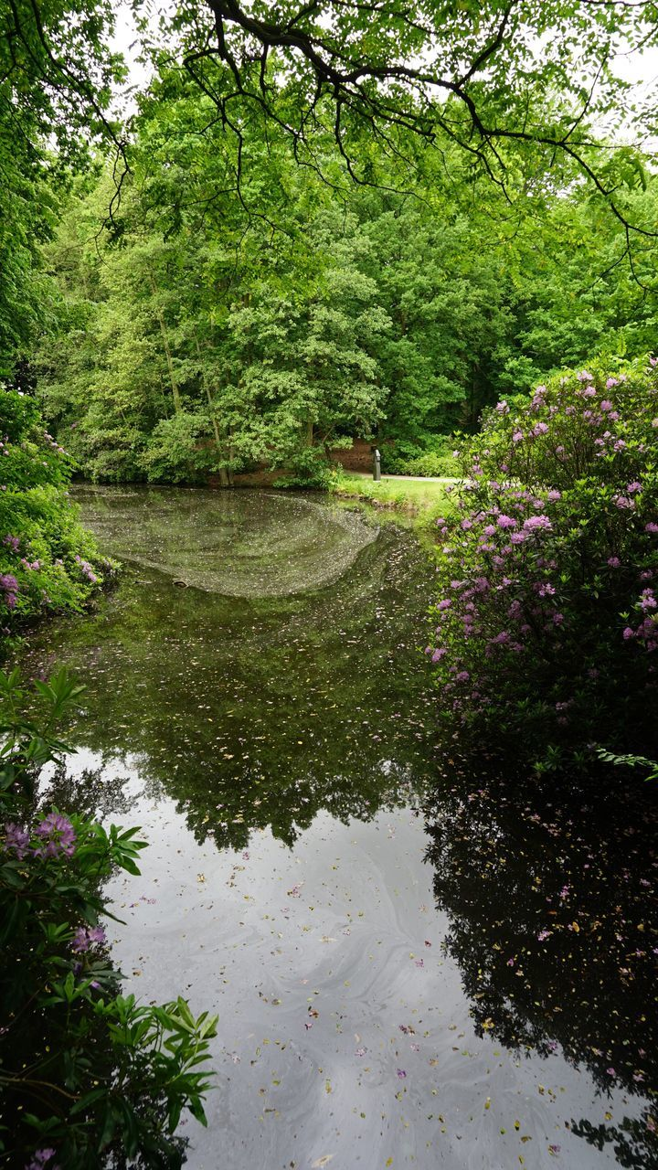 tree, nature, reflection, growth, water, outdoors, lush foliage, green color, plant, day, tranquility, no people, leaf, forest, flower, beauty in nature
