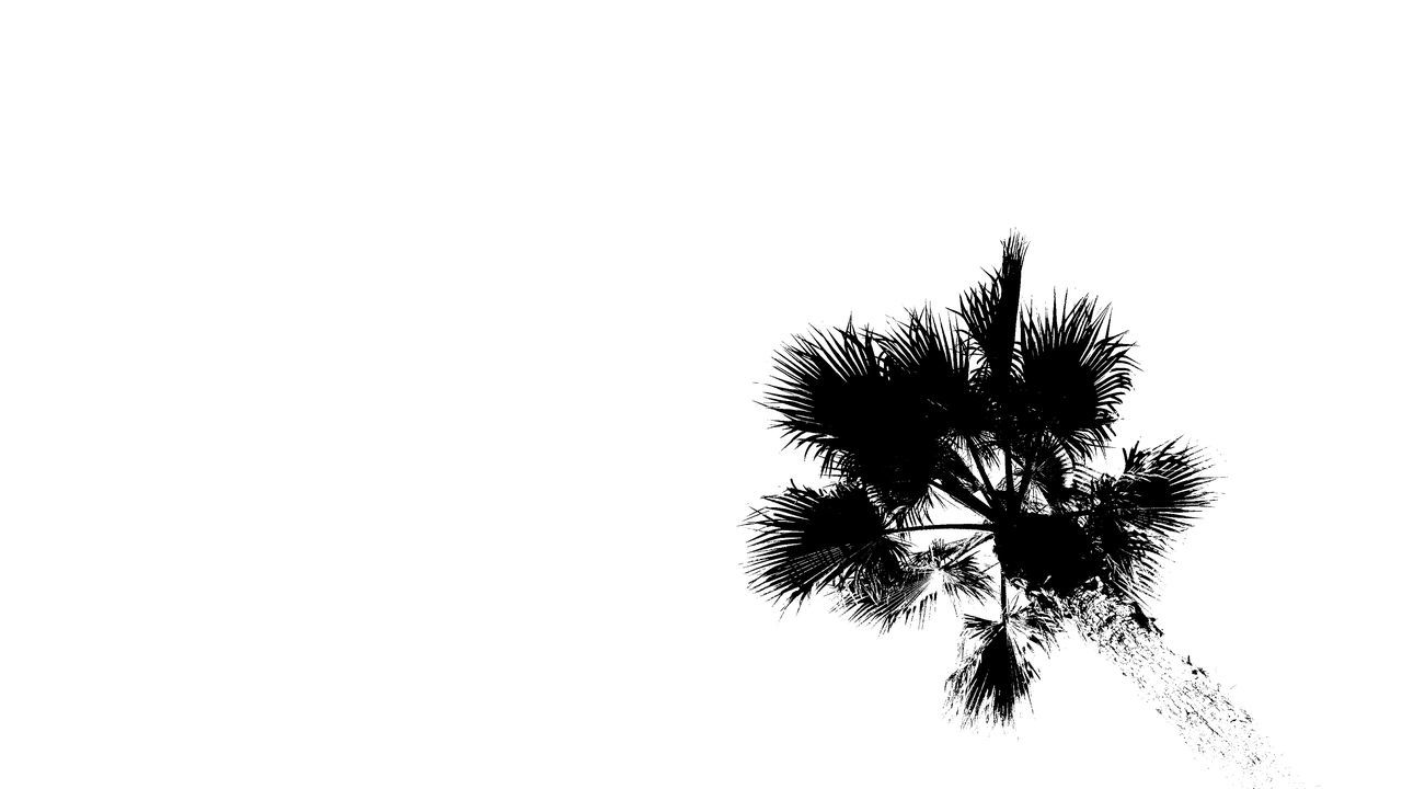 It's a Palm Tree 🌴 📸 Surrealism Streetphotography Blackandwhite Monochrome Night Street Night Photography Night Photo White Background Open Space Surreal MnMl Mnmlsm Minimalism Minimal Minimalistic Minimalmood Minimalist Minimalobsession Mobilephotography Shootermag AMPt_community Vscocam Picsart Casual