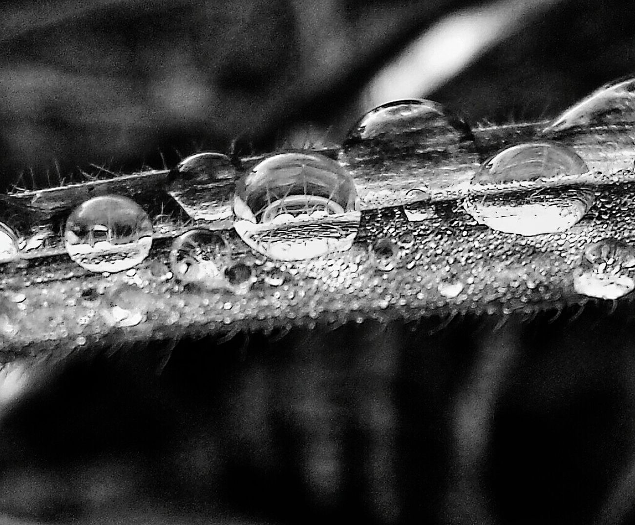 Water droplets on a blade of grass. Check This Out First Eyeem Photo Taking Photos Waterdrops Blackandwhite Blackandwhitephotography Reflection Grass