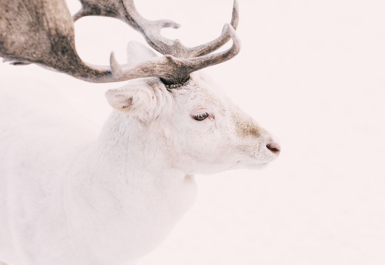 Beautiful stock photos of animals,  Animal Head,  Animal Themes,  Animal Wildlife,  Animals In The Wild