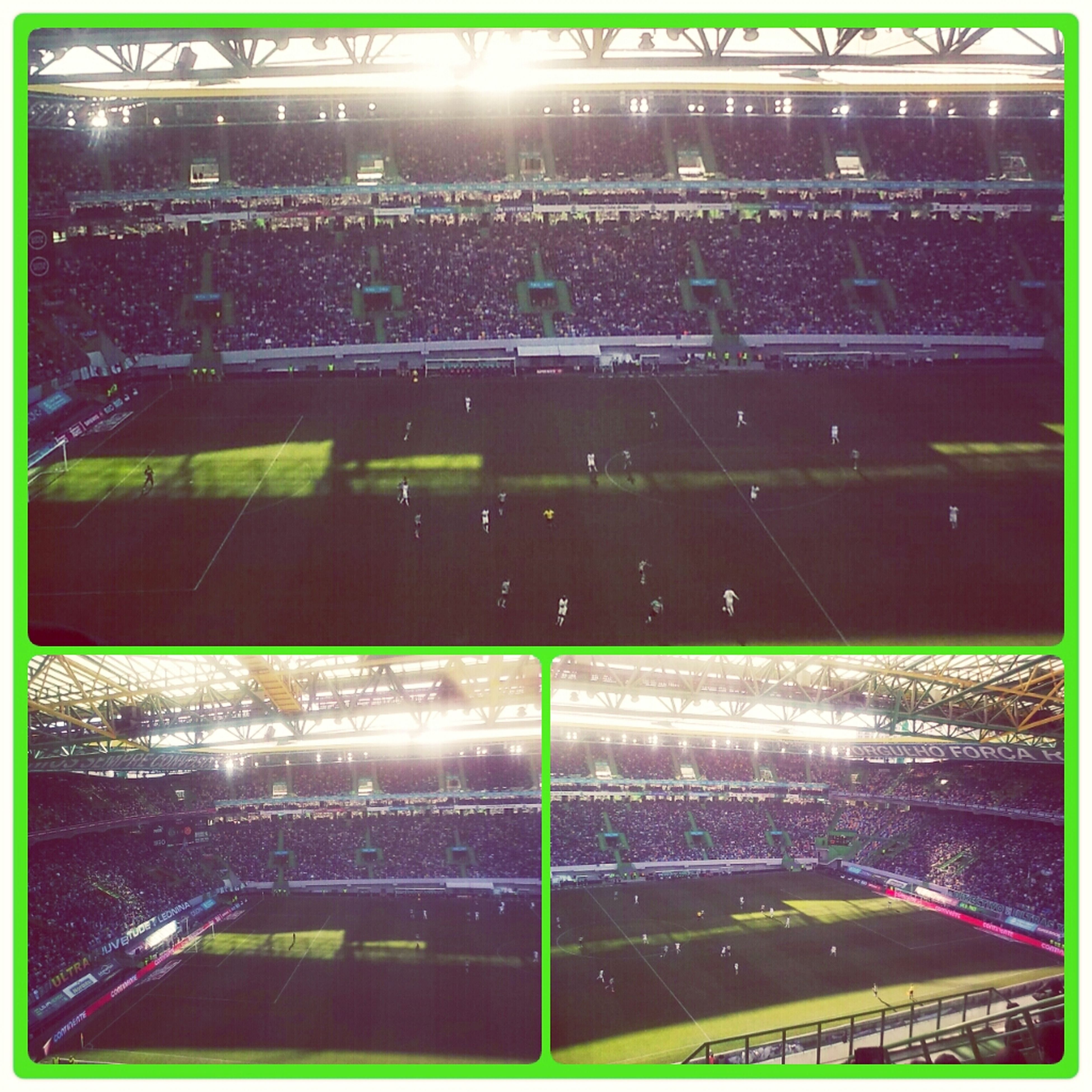 Sporting Clube Portugal, Scp , Sporting