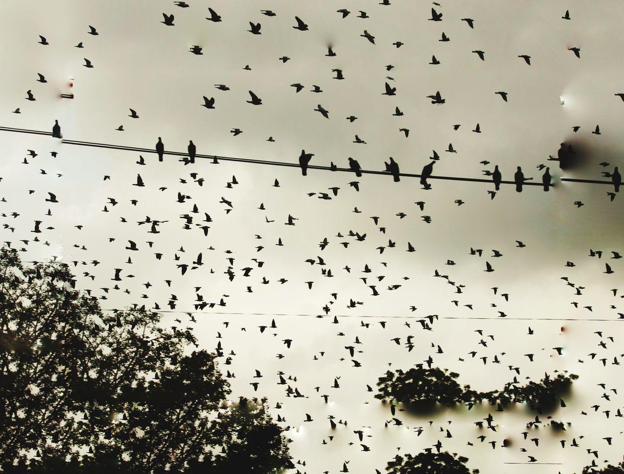 Migrating Birds Birdingphotography Canonphotography Chaosbirds Naturestraffic Flock Of Birds EyeEmNewHere Canon500d😘 Jaipur Rajasthan