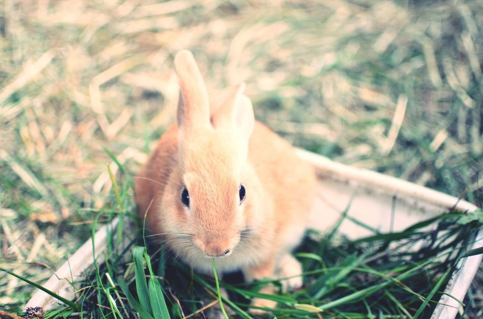 Beautiful stock photos of easter bunny, Animal Themes, Animal Wildlife, Animals In The Wild, Day