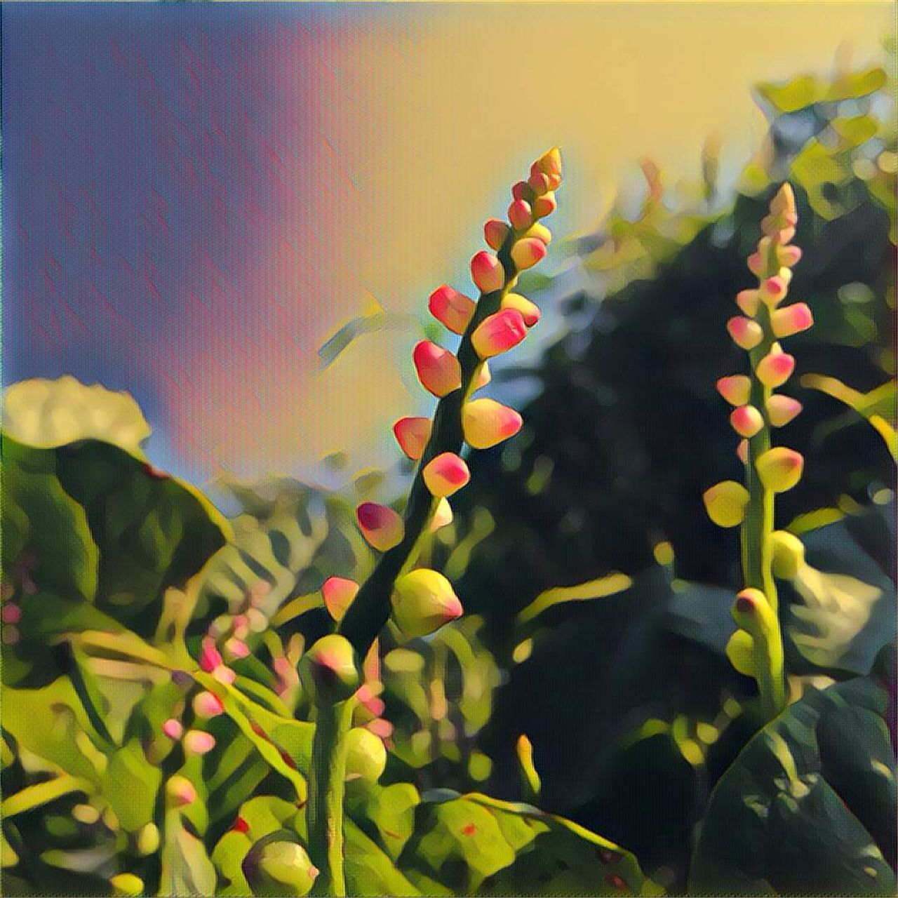 growth, plant, nature, no people, beauty in nature, outdoors, day, close-up, flower, fragility, freshness, sky
