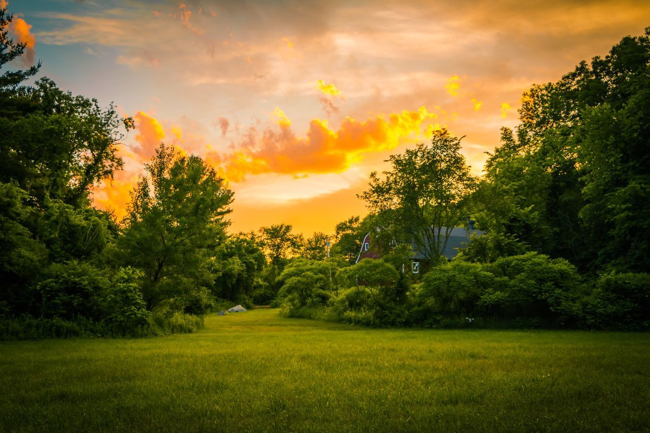 tree, sunset, beauty in nature, nature, grass, scenics, tranquility, growth, sky, cloud - sky, tranquil scene, outdoors, real people, one person, golf course, day, people