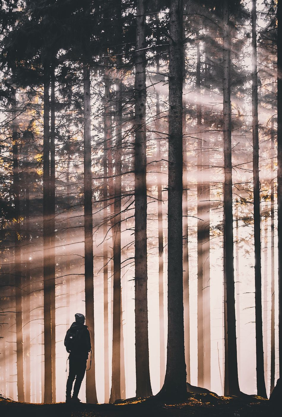 Tree Silhouette Real People Lifestyles Men Sunset Nature One Person Standing Forest Outdoors Beauty In Nature Day Adult Adults Only People One Man Only
