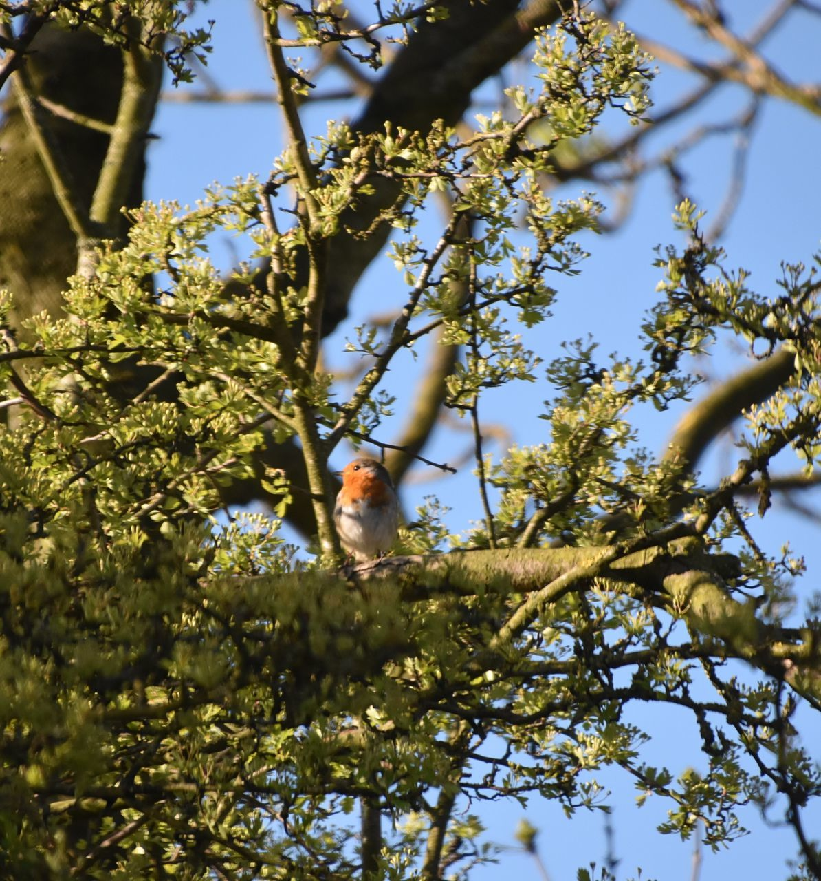 tree, one animal, low angle view, branch, animals in the wild, animal themes, nature, no people, day, bird, animal wildlife, outdoors, growth, beauty in nature, perching, sky