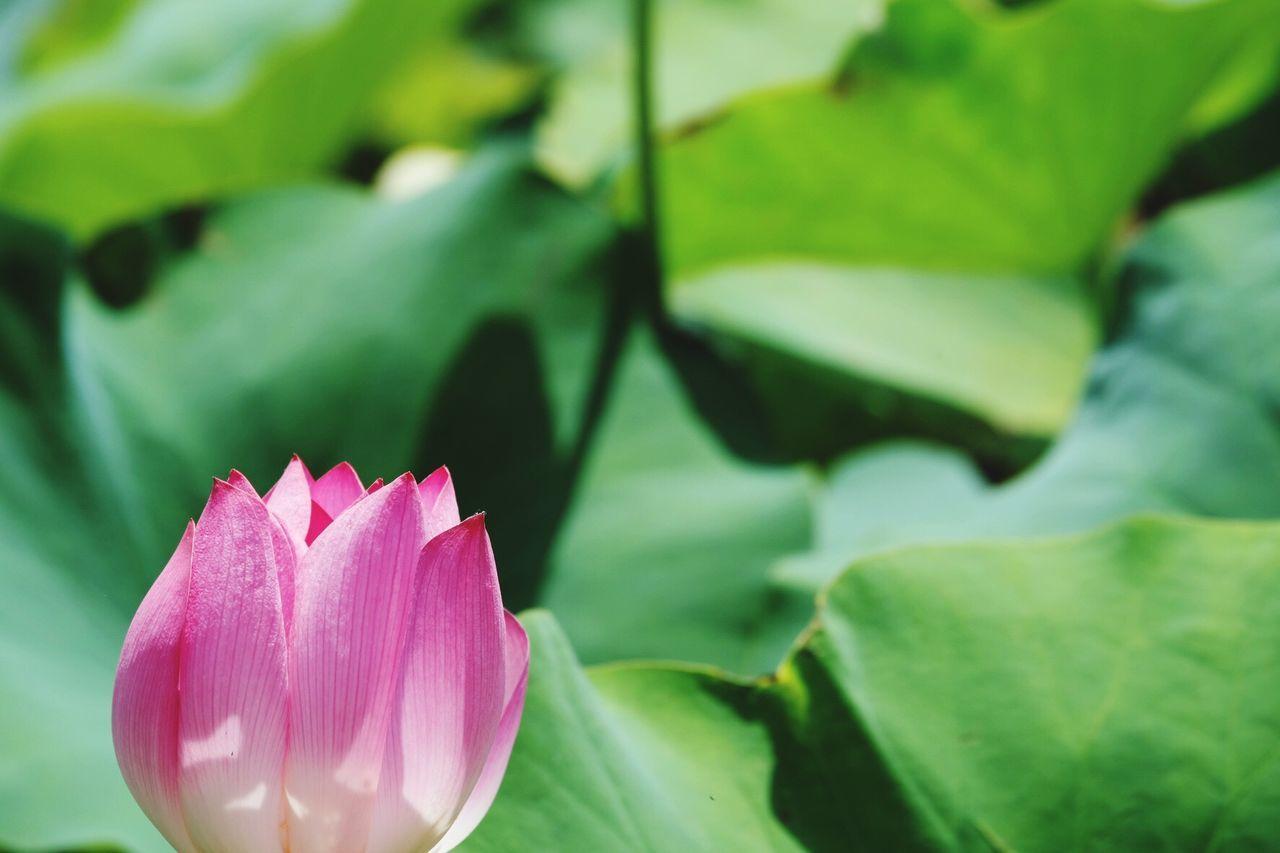御盆 Flower