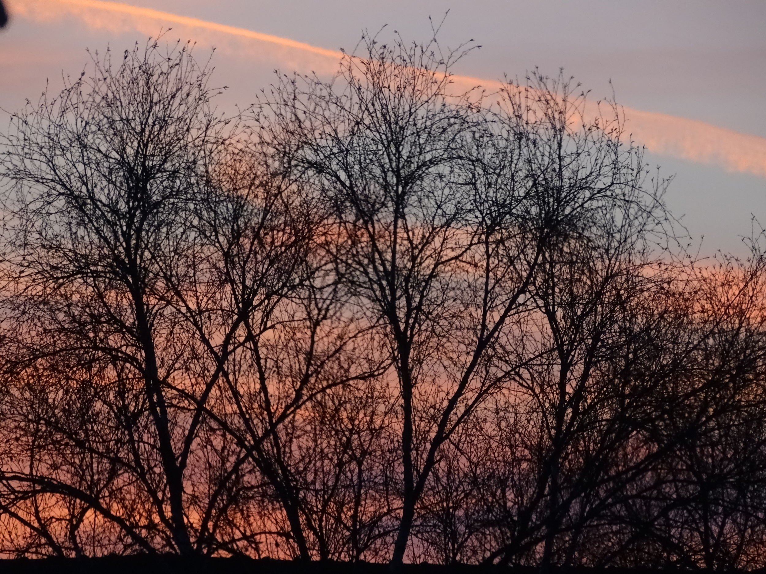 Sunset Bare Tree Tree Sky Silhouette Dusk Branch Nature Beauty In Nature No People Outdoors Low Angle View EyeEmNewHere EyeEm Selects EyeEm Best Shots Vacations No Filter The Week On EyeEm Scenics Multi Colored Beauty Day Close-up Perspectives On Nature Be. Ready.