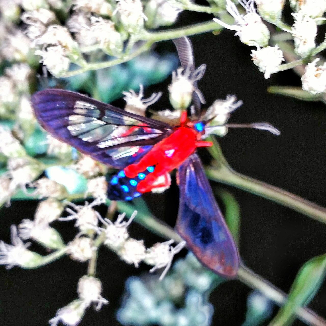 insect, animals in the wild, animal themes, butterfly - insect, no people, butterfly, one animal, close-up, fragility, flower, outdoors, plant, day, nature, animal wildlife, beauty in nature, spread wings, flower head, freshness