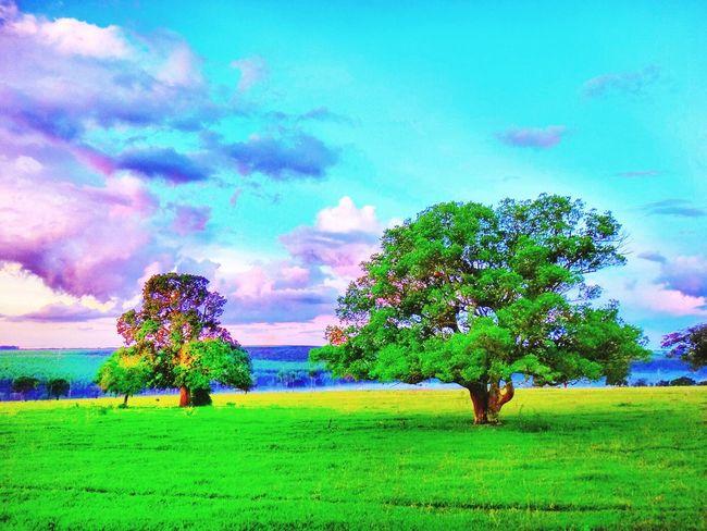 Avare SP BRASIL 🇧🇷☀️ Sunset #sun #clouds #skylovers #sky #nature #beautifulinnature #naturalbeauty #photography #landscape EyeEmBestEdits EyeEmBestPics Eye4photography  Special👌shot EyeEm Best Shots EyeEm Gallery EyeEm Nature Lover Avare Heaven