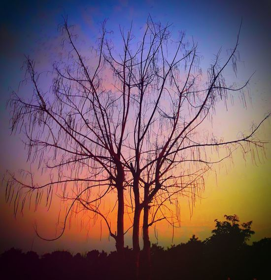 Tree Beauty In Nature Outdoors Nature Colors Of Nature Eye4photography  Silhouette Best EyeEm Shot Thailand🇹🇭 Magazineshoot Progress 2017 Scenics No People Freshness Autum Tranquility Dawn Landscape Best Of EyeEm Cloud - Sky Silhouette Trending Now 2017