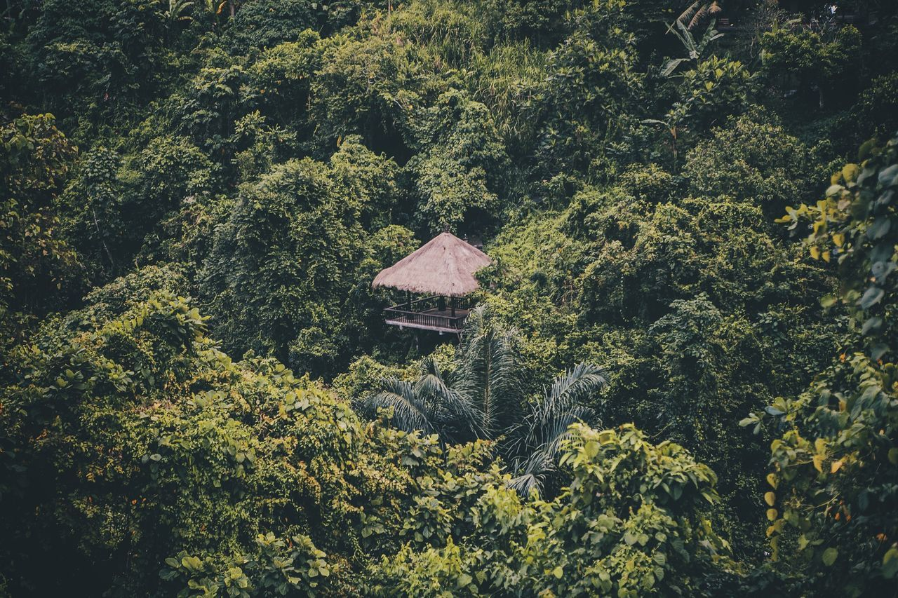 Lost in Jungle INDONESIA Bali Ubud Summer Views Protecting Where We Play The Great Outdoors - 2016 EyeEm Awards