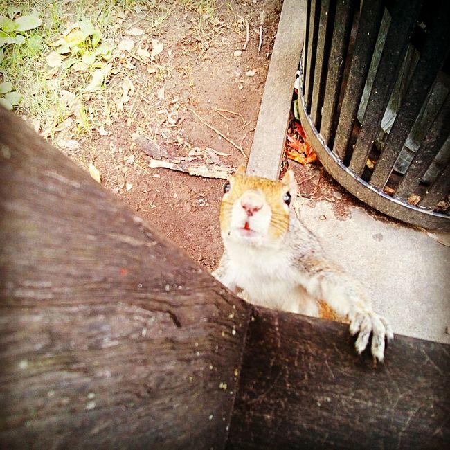Squirrel Squirrel Closeup Squirrel Photo Squirrel! Squirrel Friend  Squirrel Life