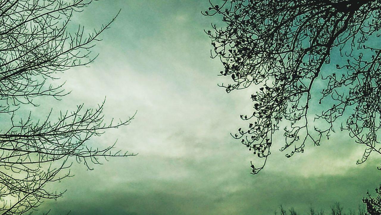 Pastel.... EyeEm Best Shots - Nature Trees And Sky EyeEm Nature Lover Shades Of Nature Love Of Nature EyeEm Best Shots EyeEm The Best Shots This Week On Eyeem Showcase: February EyeEm Gallery Eye4photography  Eyeem Mother Nature EyeEm Nature Collection My Cloud Obsession☁️ Shades Of Sky My Cloud Love☁⛅ Cloudscape Cloudscapes Shades Of The Sky EyeEm Worthy Shades Of Blue Pastel Power Eyeem Clouds Eyeem Clouds And Sky Getty Images