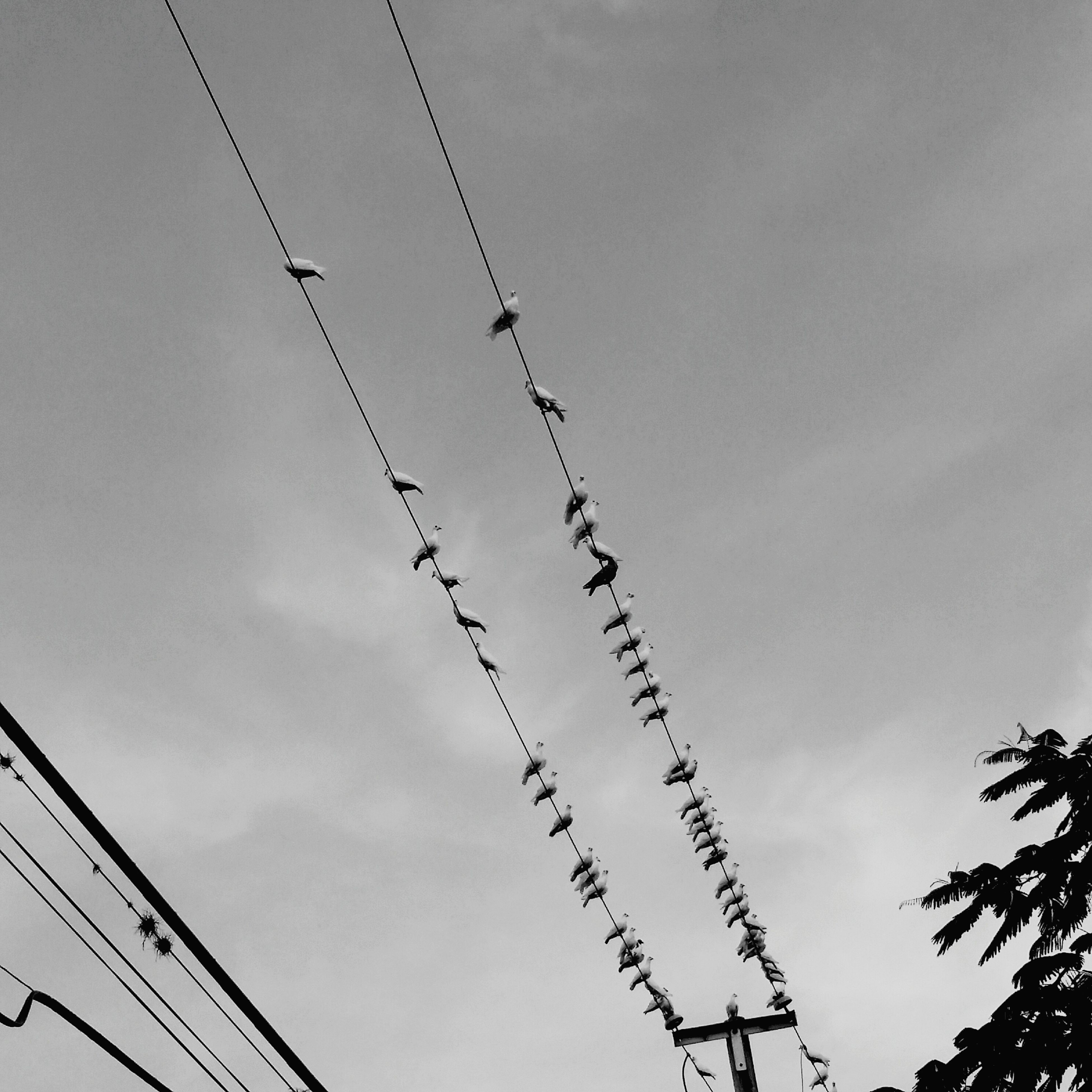 low angle view, bird, animal themes, perching, animals in the wild, wildlife, flock of birds, togetherness, cable, day, sky, perched, directly below, in a row, nature, power line, cloud - sky, outdoors, flying, high section, tranquility, no people