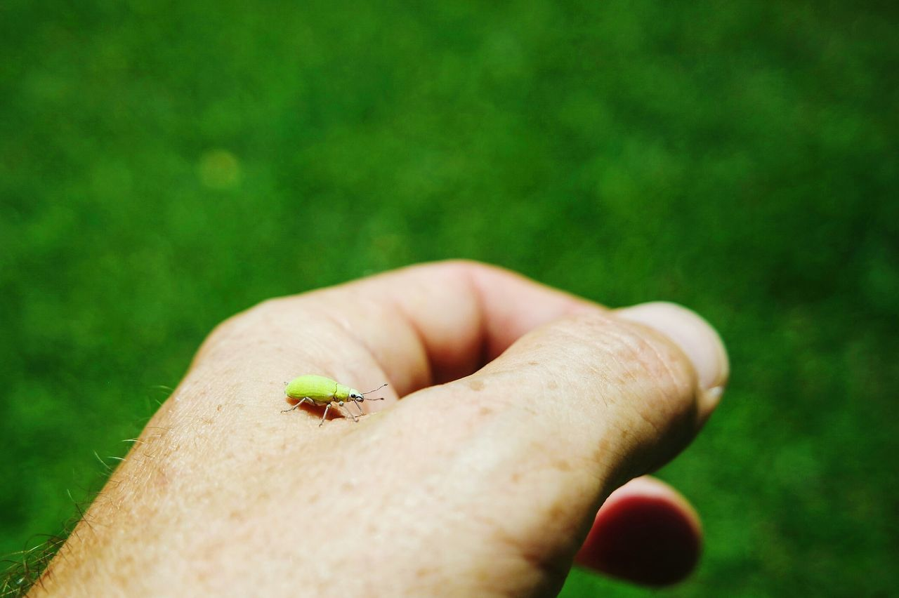 Insect on my hand One Person Human Hand Human Body Part Real People Green Color Close-up Lifestyles Day People One Woman Only Outdoors Adults Only Skin Adult Insect Photography Insect Nature_collection Fresh 3 Open Edit EyeEm Best Shots Eye4photography  Beauty In Nature Nature Green Color Animal Themes