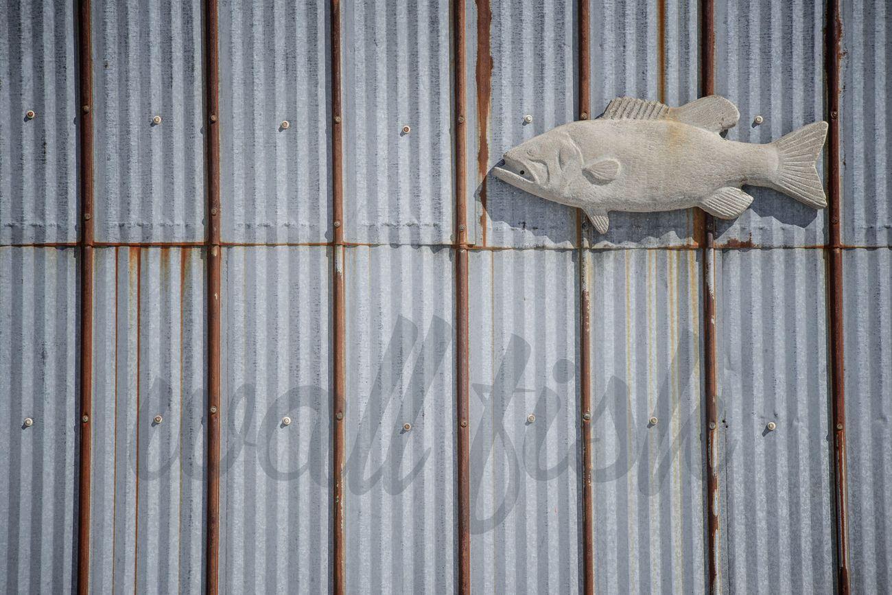 fish Fish Port Rowan Lake Erie