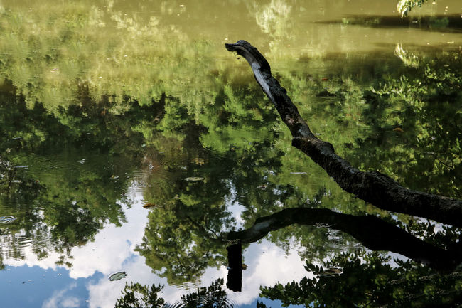 Reflection of the sky in water. Old pond in the monastery complex Kitaevo Beauty In Nature Calm Day Green Color Idyllic Lake Lakeshore Majestic Nature No People Non-urban Scene Outdoors Reflection Scenics Snag Standing Water Tranquil Scene Tranquility Tree Tree Trunk Water