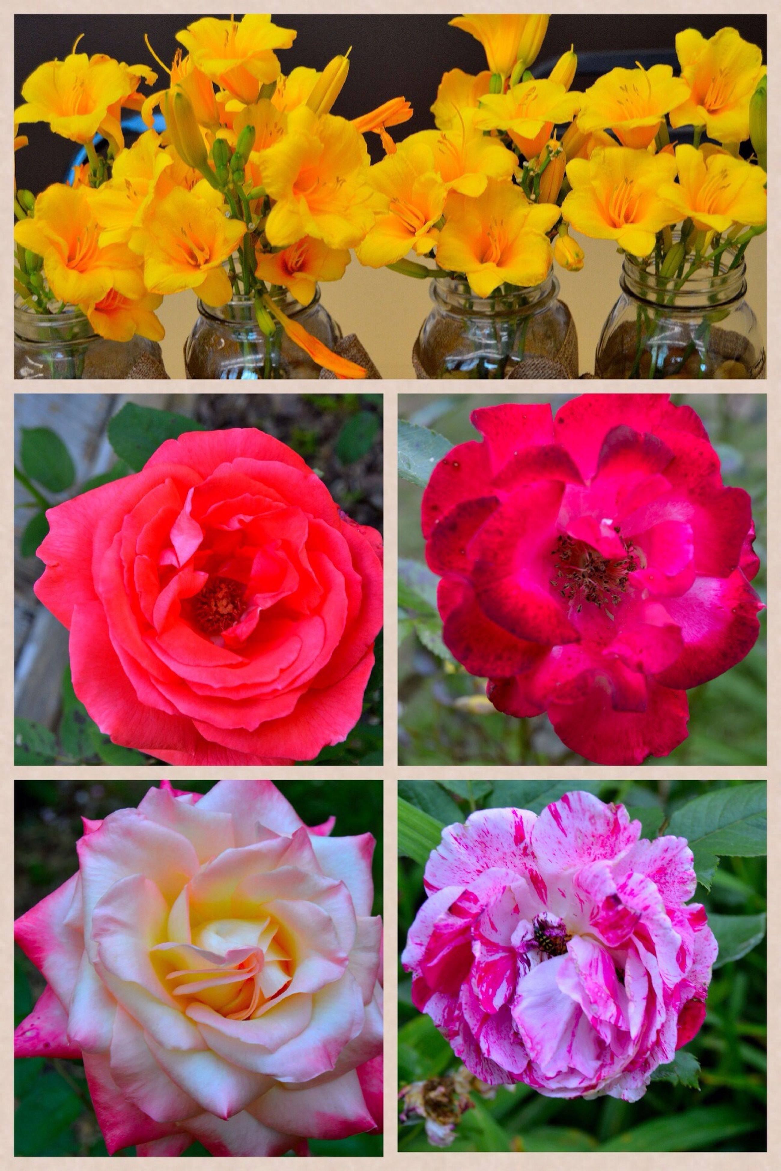 flower, petal, freshness, fragility, flower head, beauty in nature, transfer print, growth, nature, blooming, rose - flower, yellow, pink color, close-up, blossom, multi colored, bouquet, auto post production filter, bunch of flowers, vibrant color