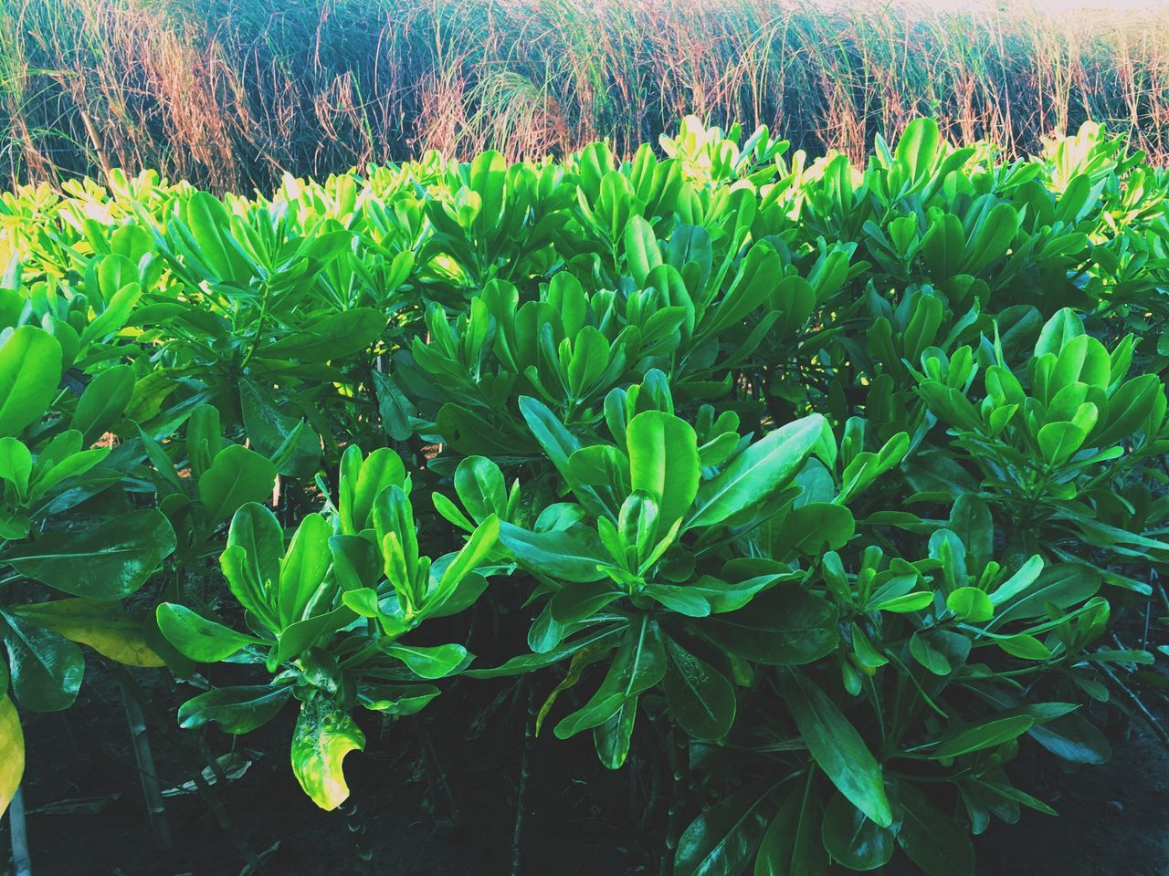 Green Plants Nice Atmosphere Beautiful Surroundings Relaxing VSCO Vscocam Vscogood Showcase March Enjoying Life Vietnam Resort Garden