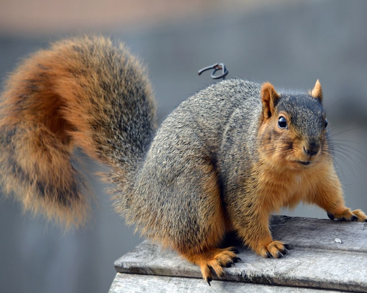 Beautiful stock photos of squirrel, Alertness, Animal Themes, Animals In The Wild, Bench