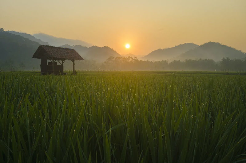 silent morning Landscape Traveling Photography INDONESIA Nature Sunrise Travel Beauty In Nature ASIA Travel Destinations Landscape_photography Yellow Central Java
