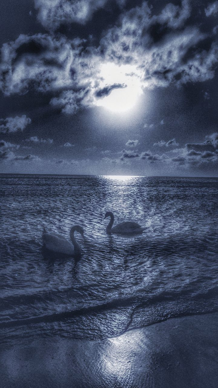 Swans Swimming On Sea Against Cloudy Sky