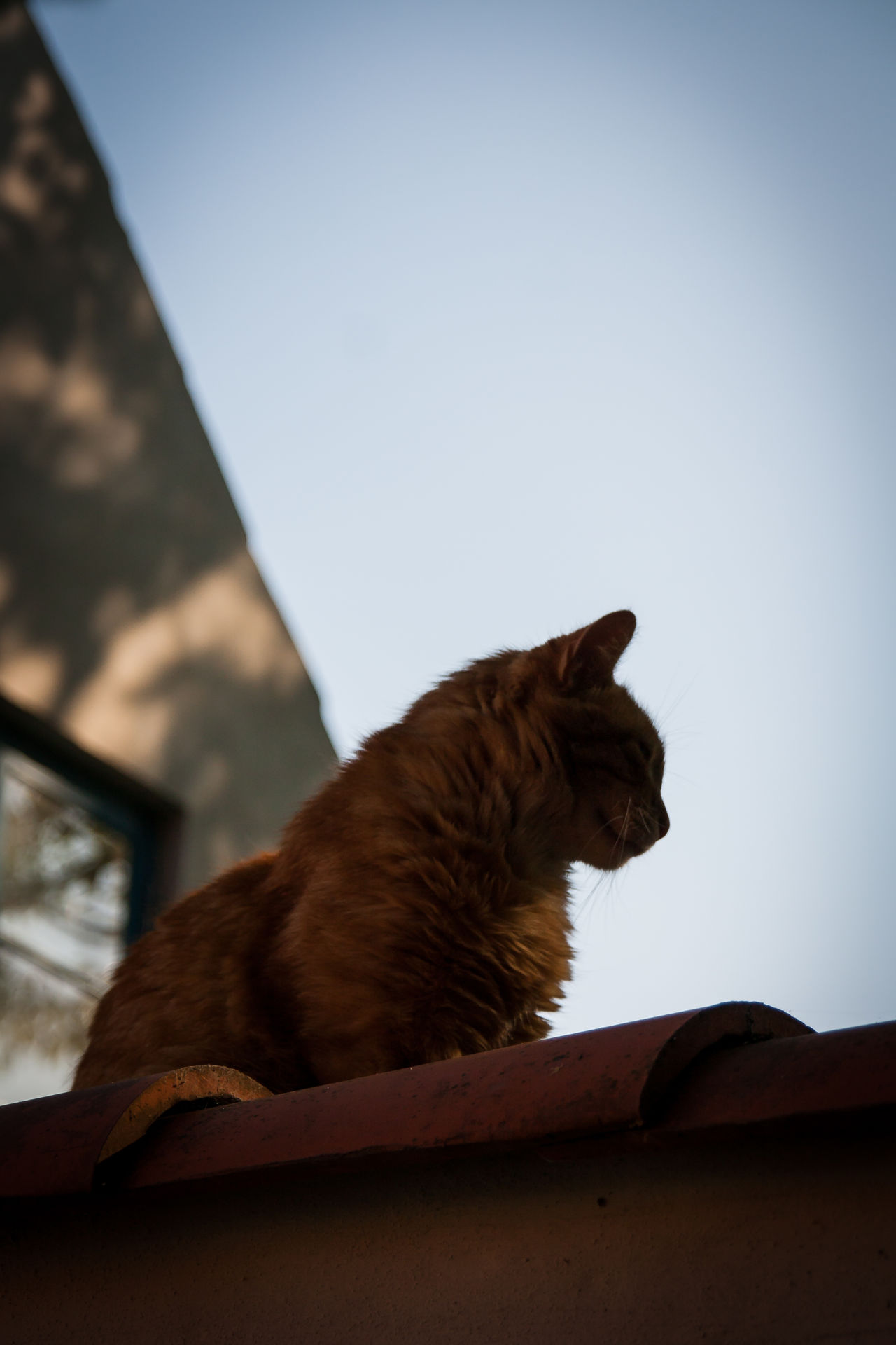 Animal Themes Close-up Day Domestic Animals Domestic Cat Feline Mammal No People One Animal Pets Silhouette Sitting Sky