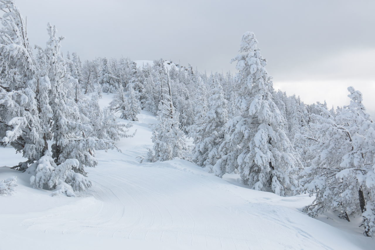 Record breaking snow depth, 13 meters = 40 feet - Winter Wonderland Cold Temperature Coniferous Tree Day Deep Snow Evergreen Tree Forest Freshness Heavenly Ski Resort Landscape Mountain Nature No People Outdoors Overcast Pine Tree Polar Climate Scenics Snowing Tree White Color Winter