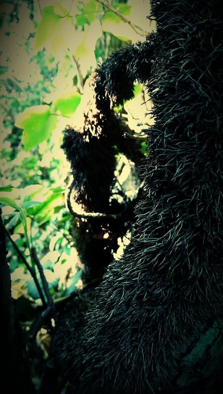 Ivy climbing tree.... Ivy Ivy Roots Ivy Covered Hello Darkness My Old Friend Spikes Shadows & Lights Shadows & Light