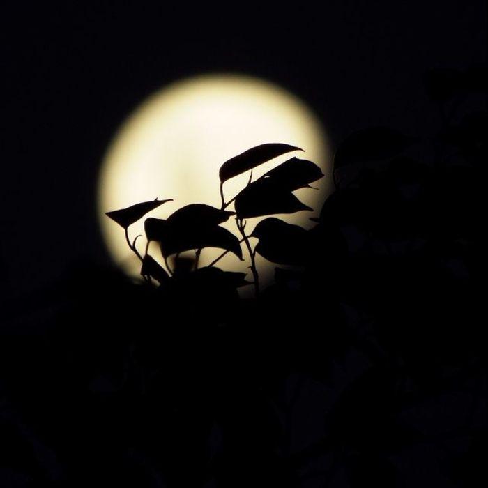 Heeiii Lua.... Vscocristao Vscobrasiloficial Vslife UMarDeTalentos Fotografiaks Useimeusolhosmagicos Vscofotografia_