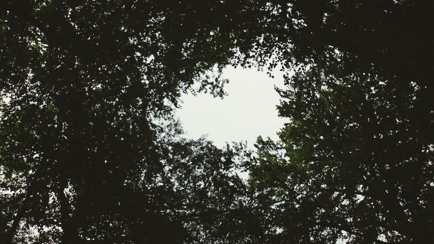 Silhouette Tree Nature Beauty In Nature Treetop Green Color Sky Outdoors Heart Shape