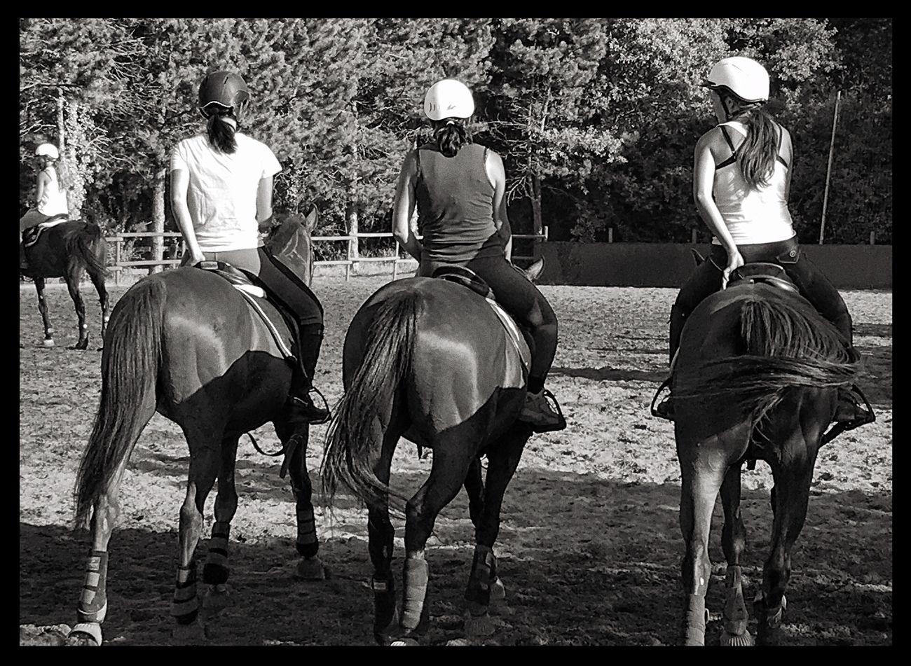 Showcase July Horse Horseball Women