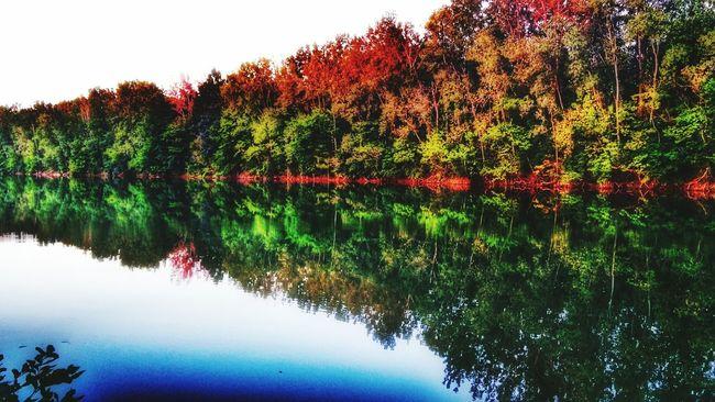 Treeflection. Nature On Blast Lakeside Glamour Into The Wild Snapseed