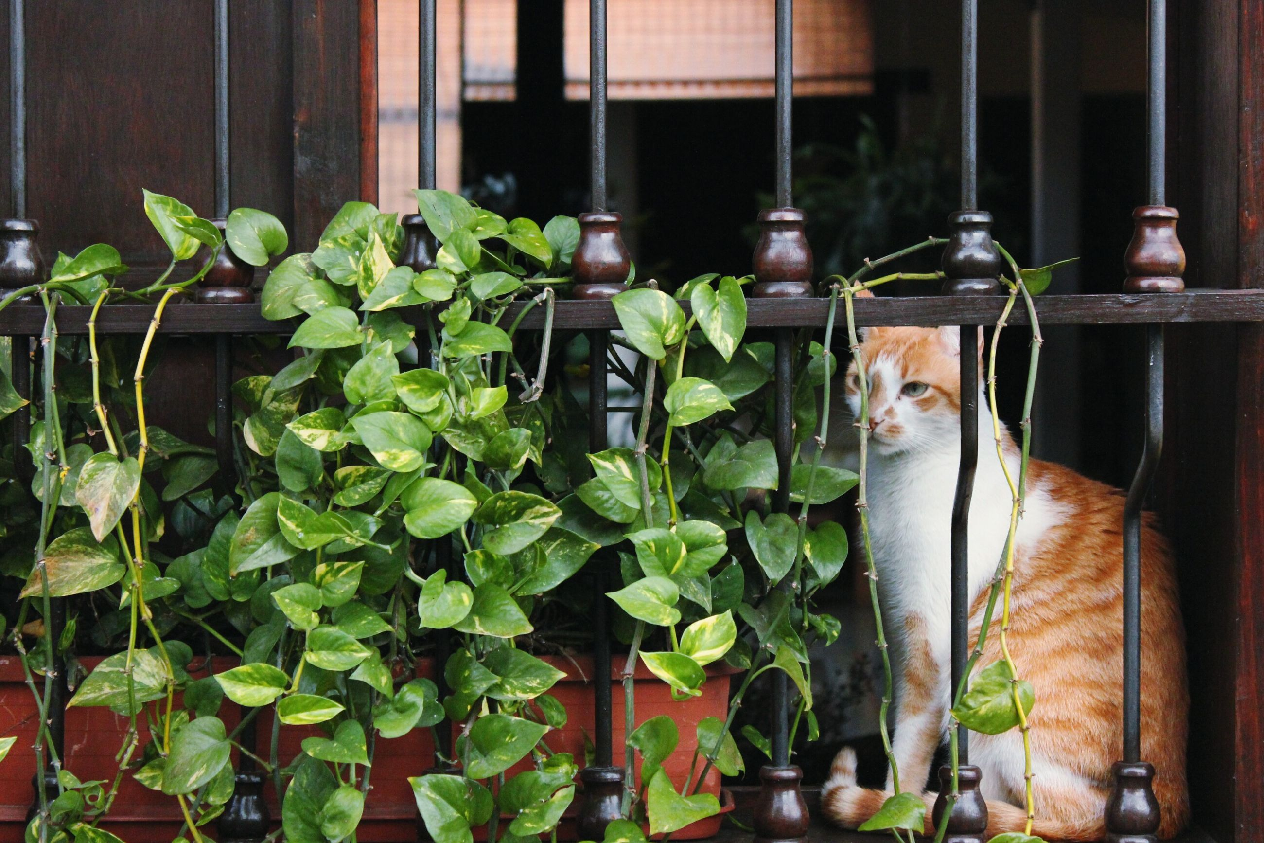 domestic cat, cat, pets, domestic animals, plant, animal themes, potted plant, mammal, one animal, window, leaf, window sill, feline, green color, growth, indoors, front or back yard, house, close-up, glass - material