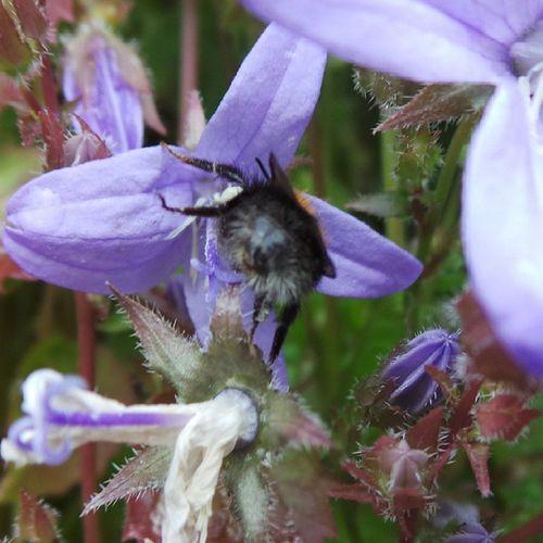 Stay on target .. Bee Nature Oldham Ig_britishisles