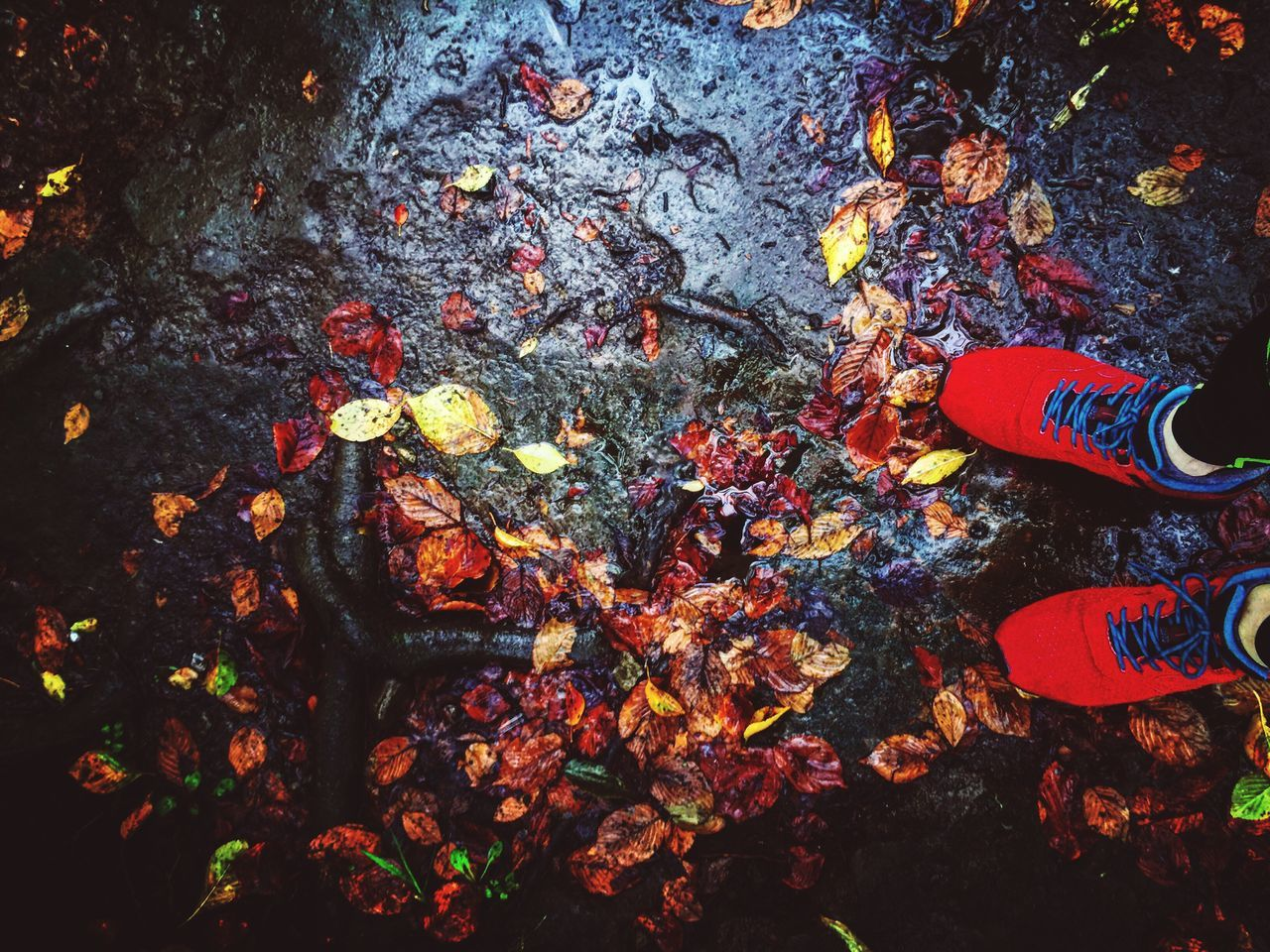 autumn, high angle view, shoe, change, real people, human leg, outdoors, nature, leaf, day, directly above, standing, low section, water, human body part, one person, beauty in nature, close-up, people