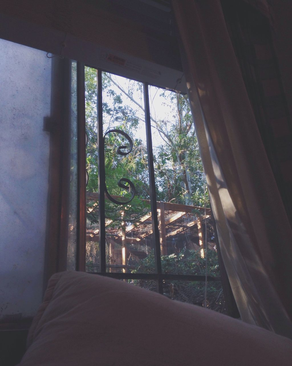 window, indoors, day, no people, tree, home interior, nature, close-up