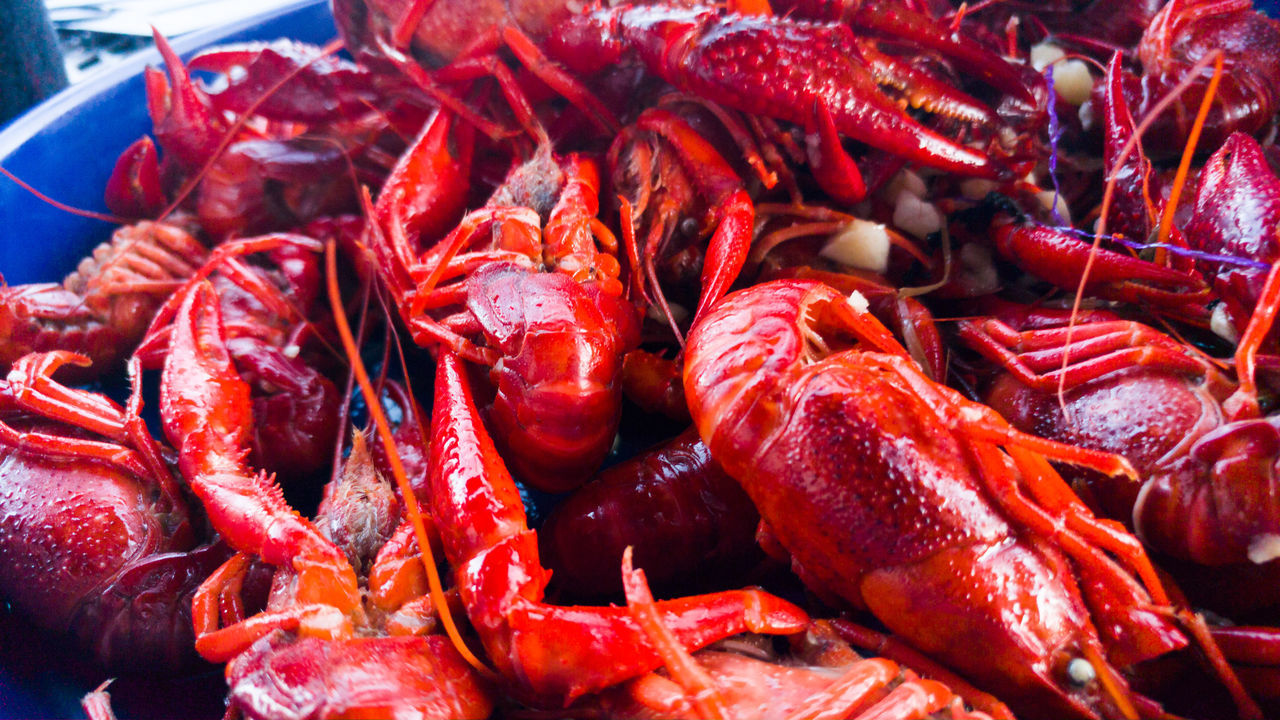 A plate full of fresh boiled crawfish Seafood Food And Drink Red Food Freshness No People Business Finance And Industry Healthy Eating Crustacean Prawn Close-up Indoors  UnderSea Day Ready-to-eat Crawfish Boil  Crawfish Fest Crawfish Cajun Cajun Flavor