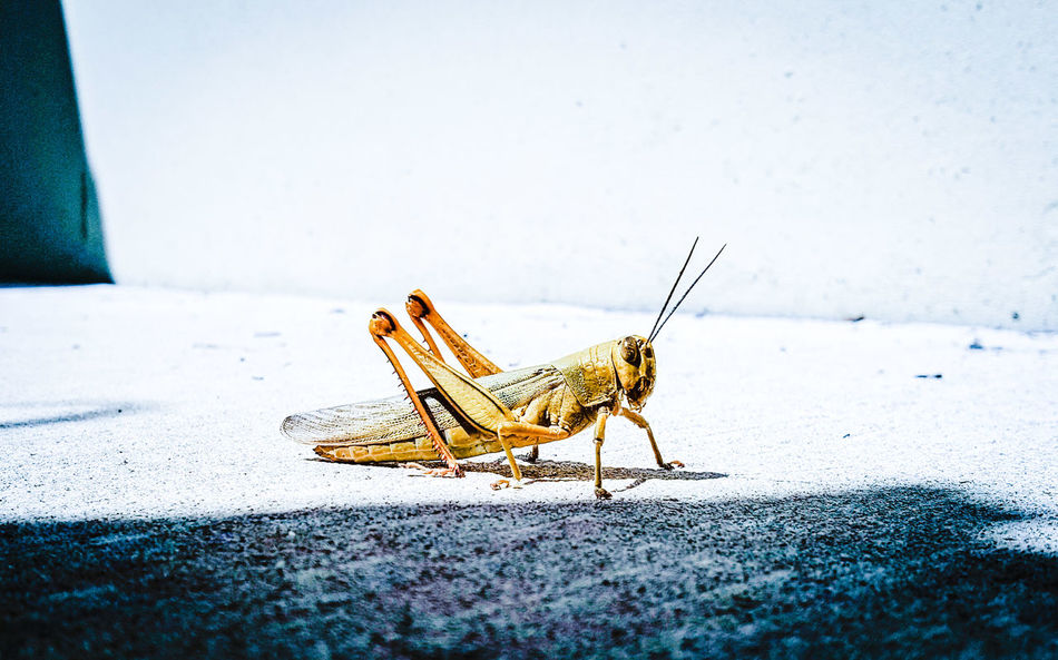 Beautiful stock photos of insects,  Alone,  Animal Themes,  Animal Wing,  Animals In The Wild
