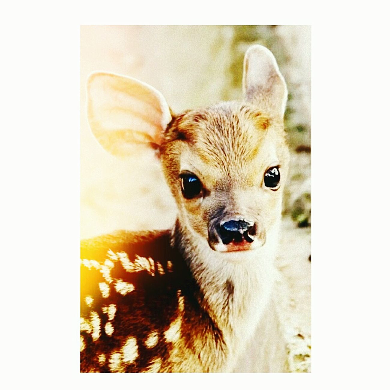 Pets маленькое чудо  Добро прелесть леса
