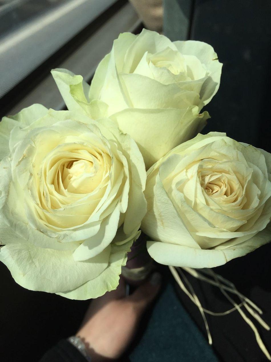 3。14的白色玫瑰…!