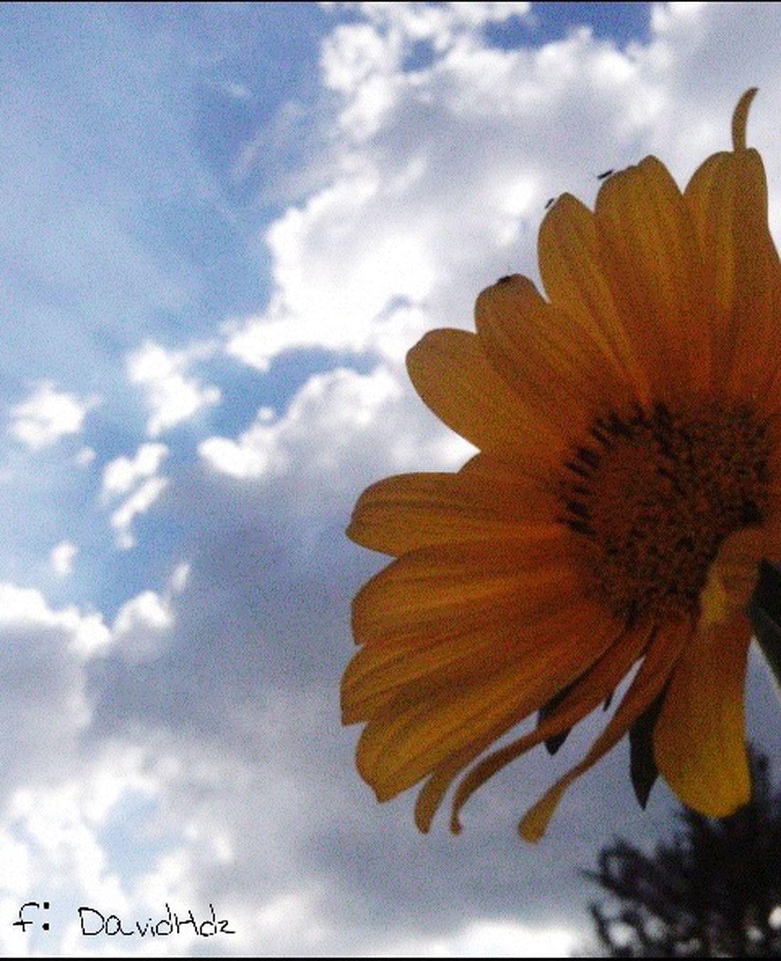Con un poco de zoom pronto les comparto las otras fotos completas :) Urbano&naturaleza Flores Silvestre Lugares Insects  Amarillo Colors Cieloazul