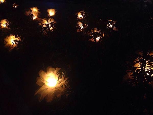 Glowing flowers. 03:35
