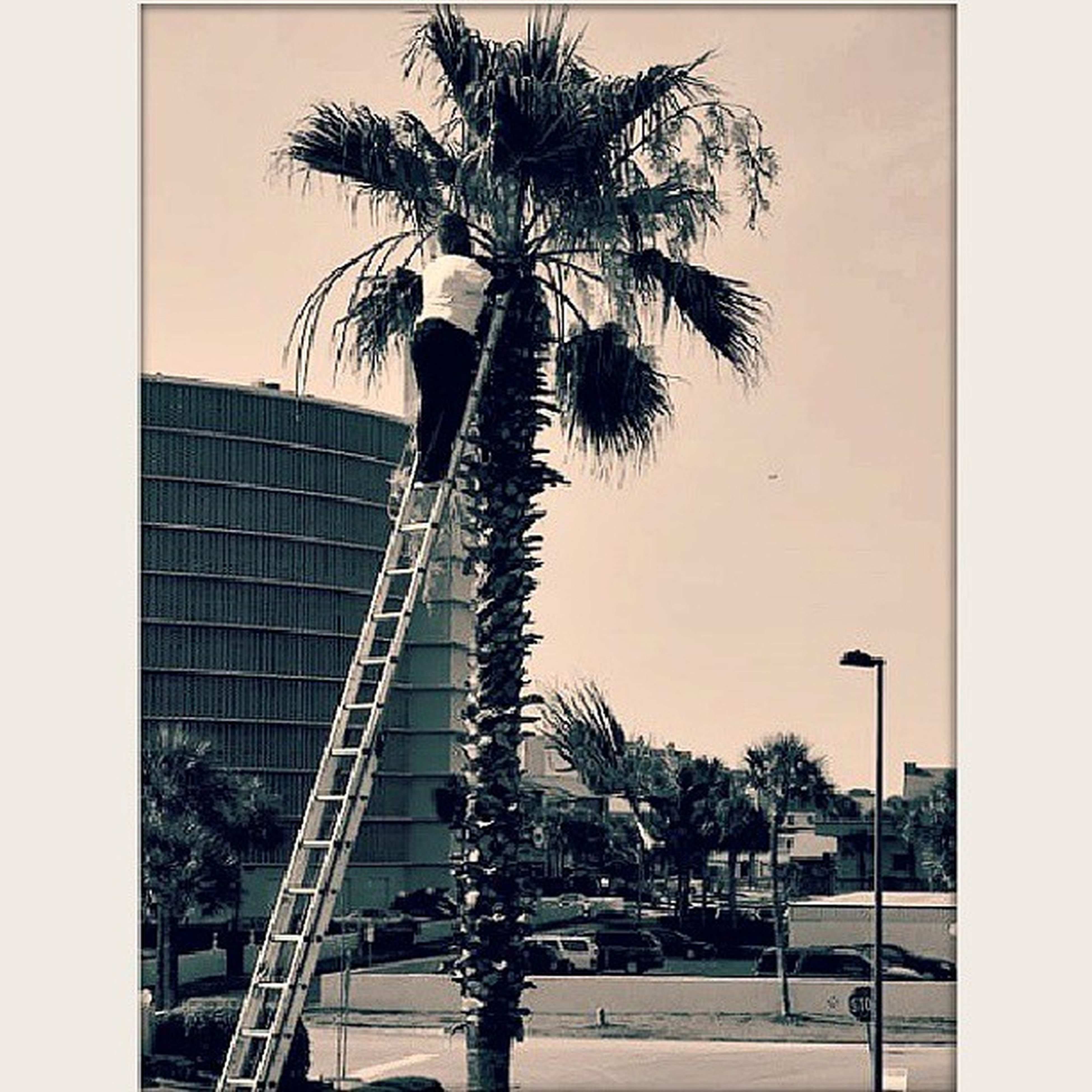 palm tree, transfer print, tree, building exterior, architecture, built structure, auto post production filter, city, tall - high, sky, growth, tree trunk, low angle view, street light, day, outdoors, coconut palm tree, clear sky, building, nature