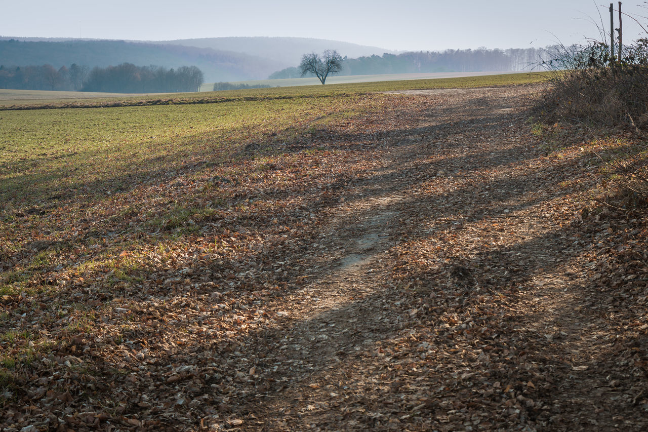 Walk at the edge of the woods. Agriculture Autumn Beauty In Nature Betterlandscapes Country Lane Day Farm February Field Landscape Leaves Nature No People Outdoors Plant Plowed Field Rural Scene Scenics Sky Tranquil Scene Tree