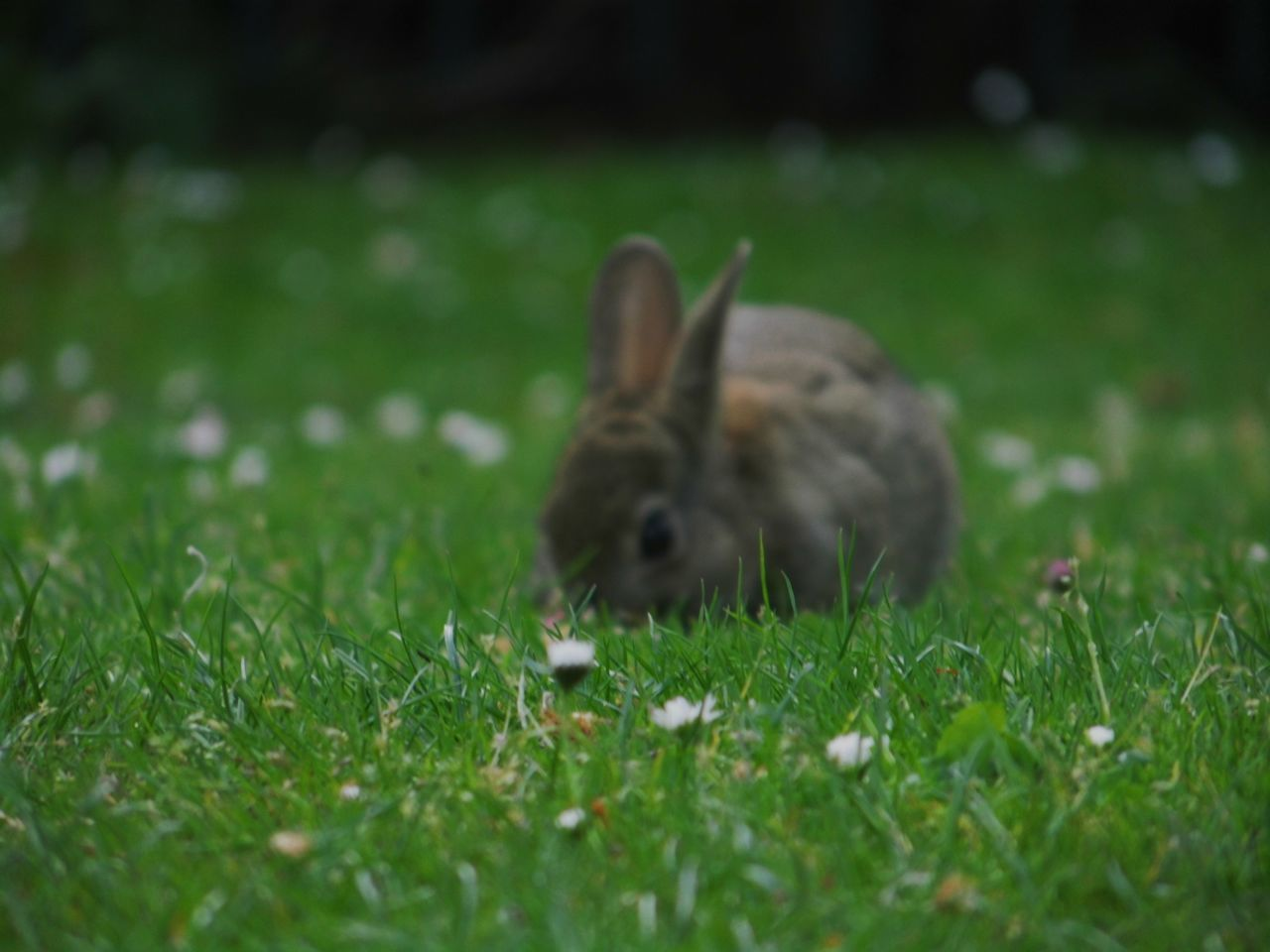 Rabbit Green Nature_collection Naturelovers Nature Animals