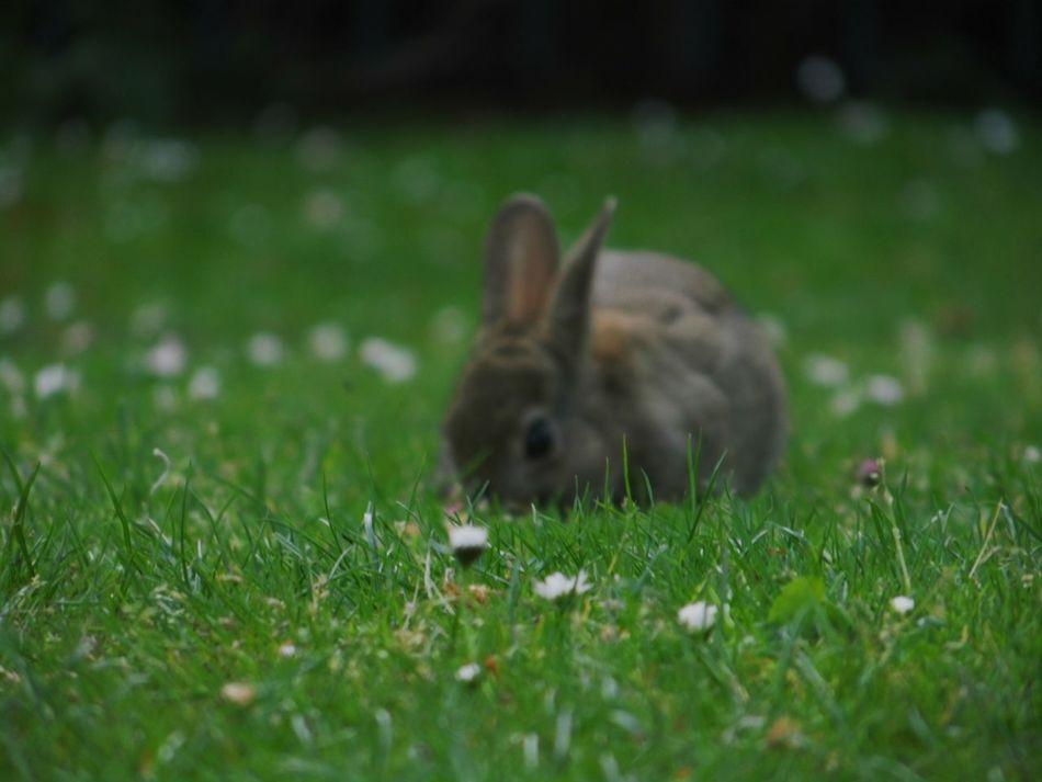Rabbit Green Nature_collection Naturelovers Nature Animals
