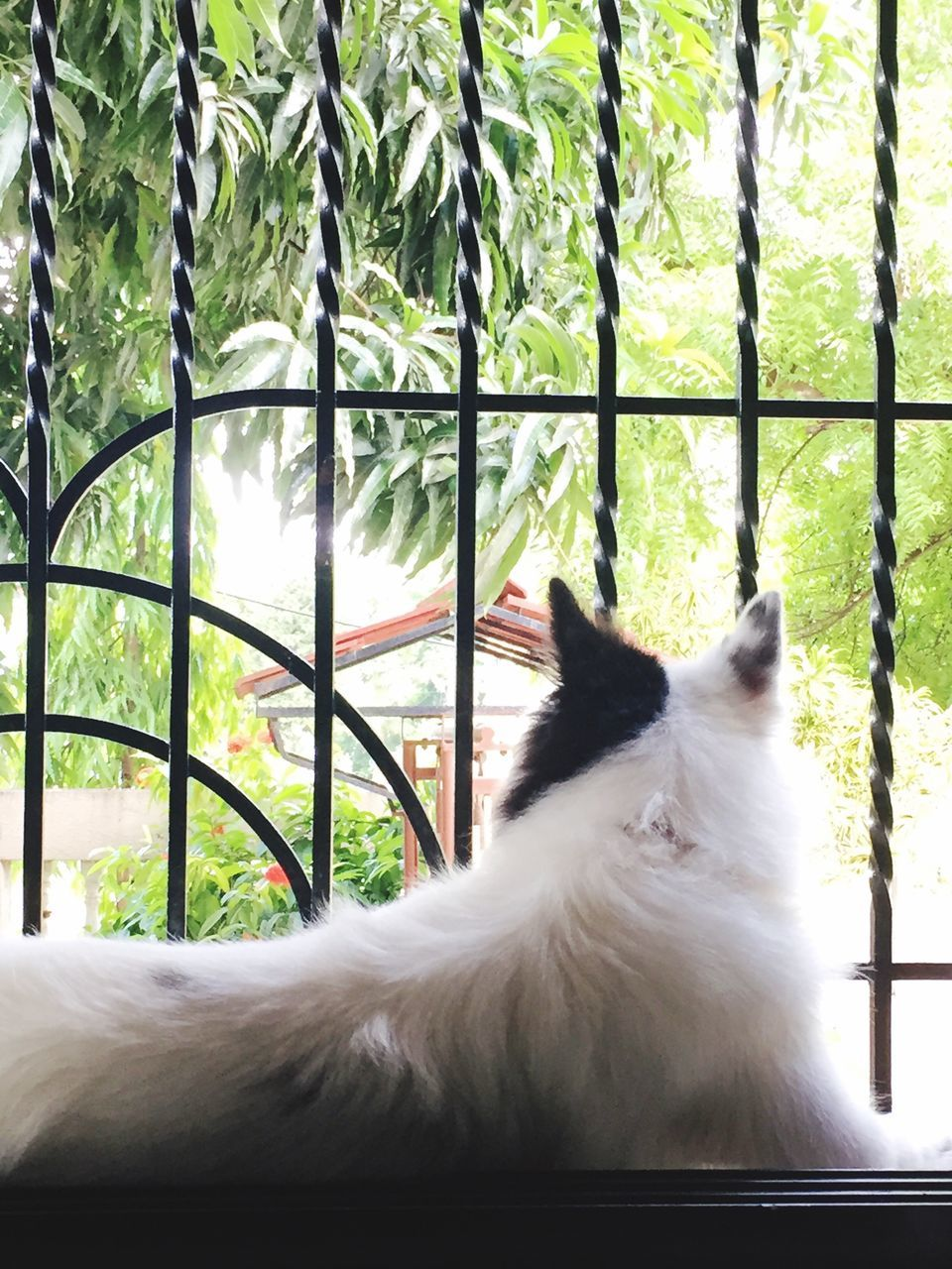 animal themes, domestic animals, one animal, mammal, horse, white color, day, pets, window, nature, no people, close-up, tree, indoors